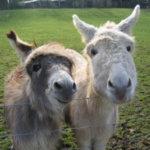 Tiergestützte Therapie: Tiere sind manchmal die besten Therapeuten
