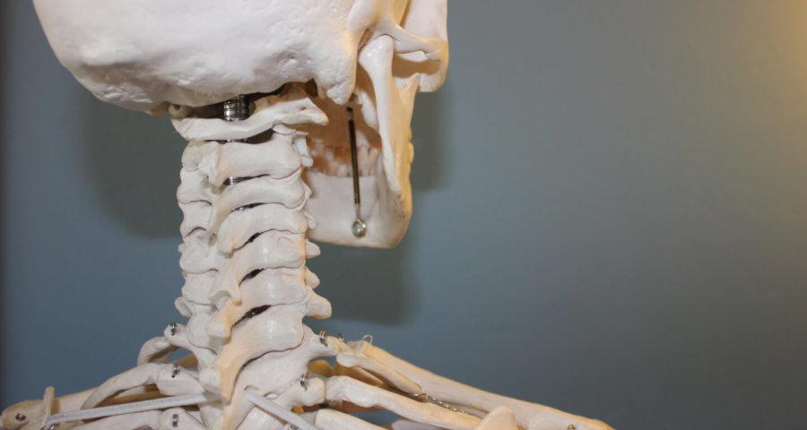 Skelett und Wirbelsäule (c) iaom-us / pixabay.de