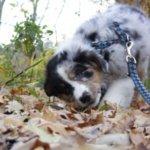 Erlaubnispflicht für Hundeschulen kommt zum 1.8.2014